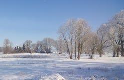 在一个多雪的领域的马 晴朗的冷淡的日 库存照片