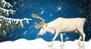 在一个多雪的风景后的寒假横幅水平的概念鹿 免版税库存图片