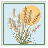 在一个大太阳的商标下的麦子 免版税库存照片