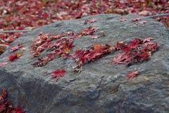 在一个大岩石的红槭叶子 免版税库存图片