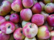 在一个大木箱,关闭的新鲜的有机红色苹果,背景 图库摄影