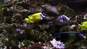 在一个大水族馆特写镜头的异乎寻常的鱼 影视素材