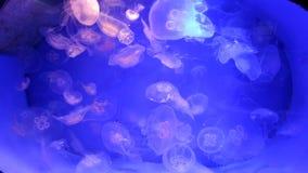 在一个大水族馆的水母 影视素材