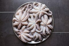 在一个大盛肉盘的新鲜的未加工的章鱼 概念-健康食物, lo 免版税库存照片