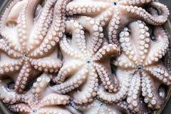 在一个大盛肉盘的新鲜的未加工的章鱼 概念-健康食物, lo 免版税图库摄影