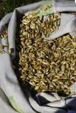 在一个大袋子的有机Einkorn麦子五谷 库存图片