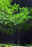 在一个大黑大厦旁边的绿色树 库存图片