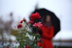 在一个女孩的背景剪影的红色玫瑰有伞的 免版税库存图片