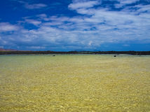 在一个安静的海湾的绿色水在海洋附近 黑火山岩海岸  在水的强光 从微风的波浪 微风 免版税图库摄影