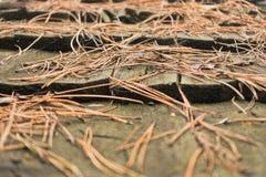 在一个客舱木屋顶的杉木针在Kosutnjak森林,贝尔格莱德里 库存图片