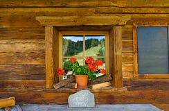 在一个家的窗口的花一个古老大厦的 库存照片
