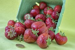 在一个容器的新鲜的草莓,直接地从草莓农场 库存照片