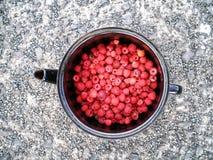 在一个容器的莓在沥青 库存照片