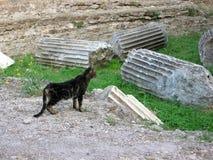 在一个寺庙的废墟的平纹小猫对Tivoli的在意大利 库存图片