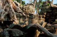 在一个寺庙的树在Ta Prohm 免版税库存照片