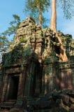 在一个寺庙的树在Ta Prohm 免版税图库摄影