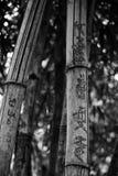在一个寺庙的竹子在越南 库存图片