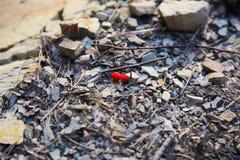 在一个小壁炉的花楸浆果 免版税库存图片