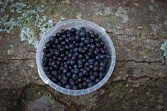 在一个小桶的蓝莓 免版税库存照片
