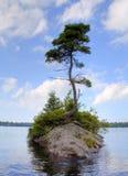 在一个小海岛上的一棵偏僻的树 免版税库存照片