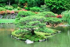 在一个小海岛上的小树在一个小池塘 免版税图库摄影