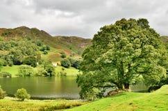 在一个小湖边缘的美丽如画的结构树 免版税库存图片