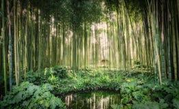 在一个小湖附近的竹藤茎在Ninfa庭院里  库存图片