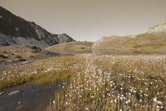 在一个小的湖旁边的山植物群在阿尔卑斯 库存图片