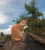 在一个小谷仓的木屋顶的一只红白的猫村庄和蓝色多云天空背景的  免版税库存图片