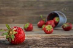 在一个小金属桶的野草莓 免版税库存图片