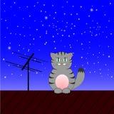在一个屋顶的灰色猫在晚上 库存图片