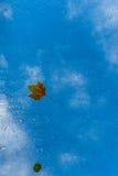在一个屋顶窗口的叶子在秋天 图库摄影