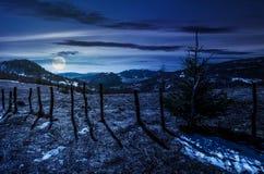 在一个山坡的云杉的树春天在晚上 库存图片