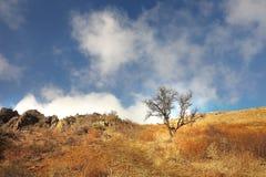 在一个山坡的偏僻的树在一棵明亮的秋天草 库存图片