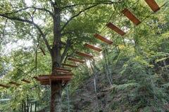 在一个山森林的丛林的垂悬的足迹在早晨阳光下 免版税库存图片