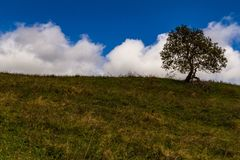在一个山草甸的偏僻的树反对美丽的多云天空 免版税库存照片