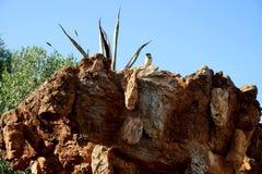 在一个岩石供以座位在公园鸟 库存照片
