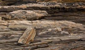 在一个岩石架子的海鸥由海 库存图片
