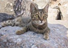 在一个岩石的一只野生猫在以弗所废墟  免版税图库摄影