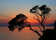 在一个岩石的两棵杉木反对日落背景 图库摄影