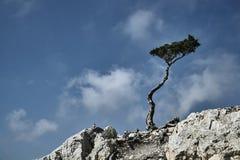 在一个岩石的唯一树在天空的背景 免版税图库摄影