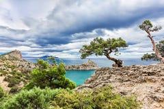 在一个岩石的杉木在海附近 库存图片