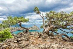 在一个岩石的杉木在海附近 库存照片