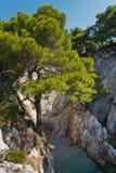 在一个岩石的杉树在海角Amarandos附近的透明的绿松石水在斯科派洛斯岛海岛 库存照片