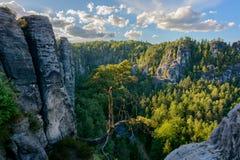 在一个岩石的树在撒克逊人的瑞士国家公园,萨克森,德国 库存图片