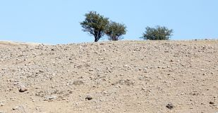 在一个岩石的树本质上 免版税库存图片