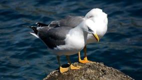 在一个岩石的海鸥在海