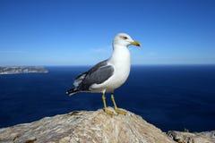 在一个岩石的海鸥由海 免版税库存图片