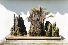 在一个岩石的盆景树对白色墙壁在阳光下 库存图片