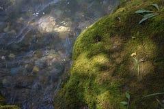 在一个岩石的绿色青苔本质上 免版税库存图片